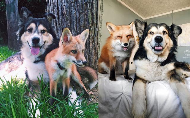foxandhound1