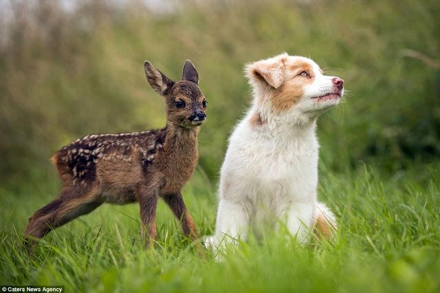 2a317e2300000578-3148566-inseparable_pet_photographer_and_microbiologist_anna_auerbach_28-a-3_1435936903075