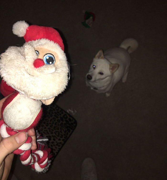 dog-toy-santa-mall-picture-kya-4
