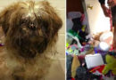 Dog Rescued From House Filled With Trash
