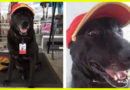 Dog Whose Owners Abandoned Him At A Gas Station Gets A Full Time Job