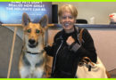 Couple Adopts The Last Dog Left At The Shelter, A Disabled German Shepherd