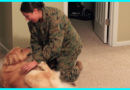 Golden Retriever Has The Most Heartwarming Reunion With His Military Mom