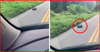 Mom Sees Lumpy Trash Bag On Way To Work, Rips It Open When It Starts To Walk Across The Road