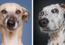 5 photos of dogs seriously questioning the mental health of their owners