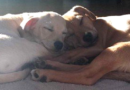 These two adorable brothers have become inseparable since they lost their mother