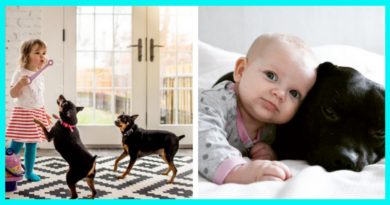 Top 13 most beautiful photos of friendship between a child and a dog